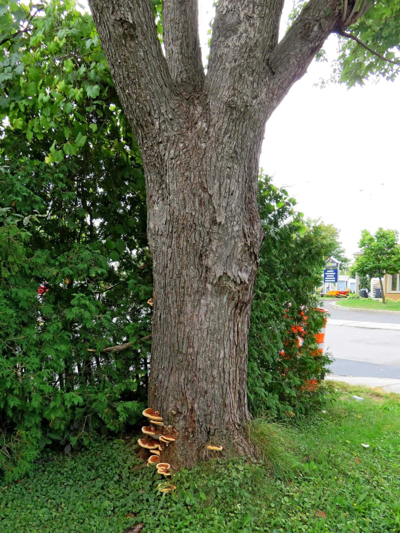 Expertise d'arbres