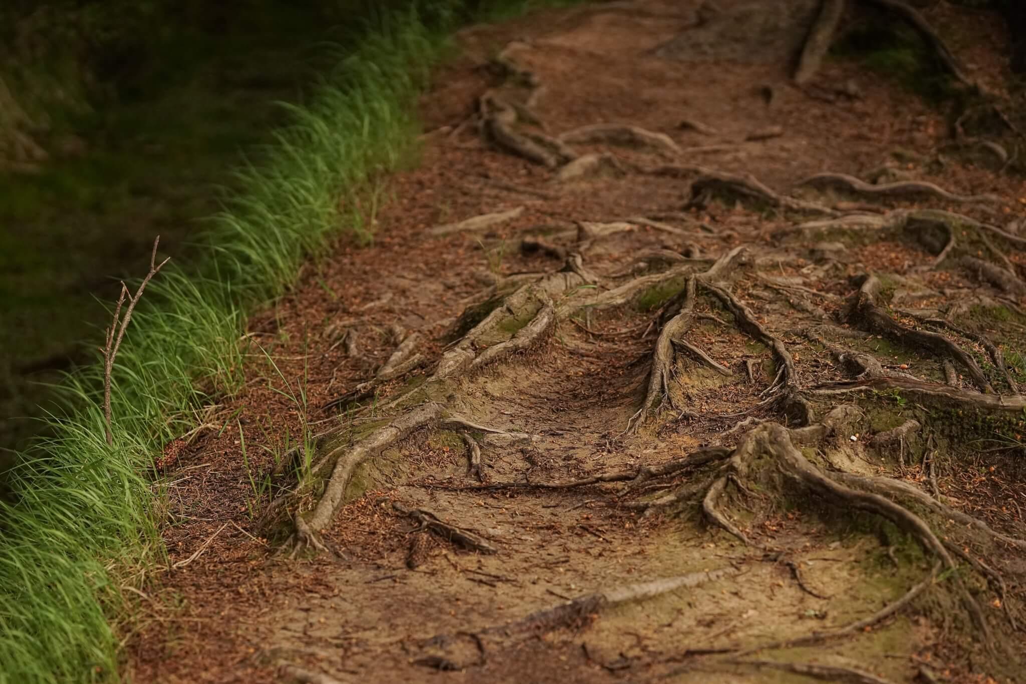 Pour en finir avec les mythes sur les racines d'arbre…